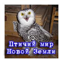 Птичий мир НЗ